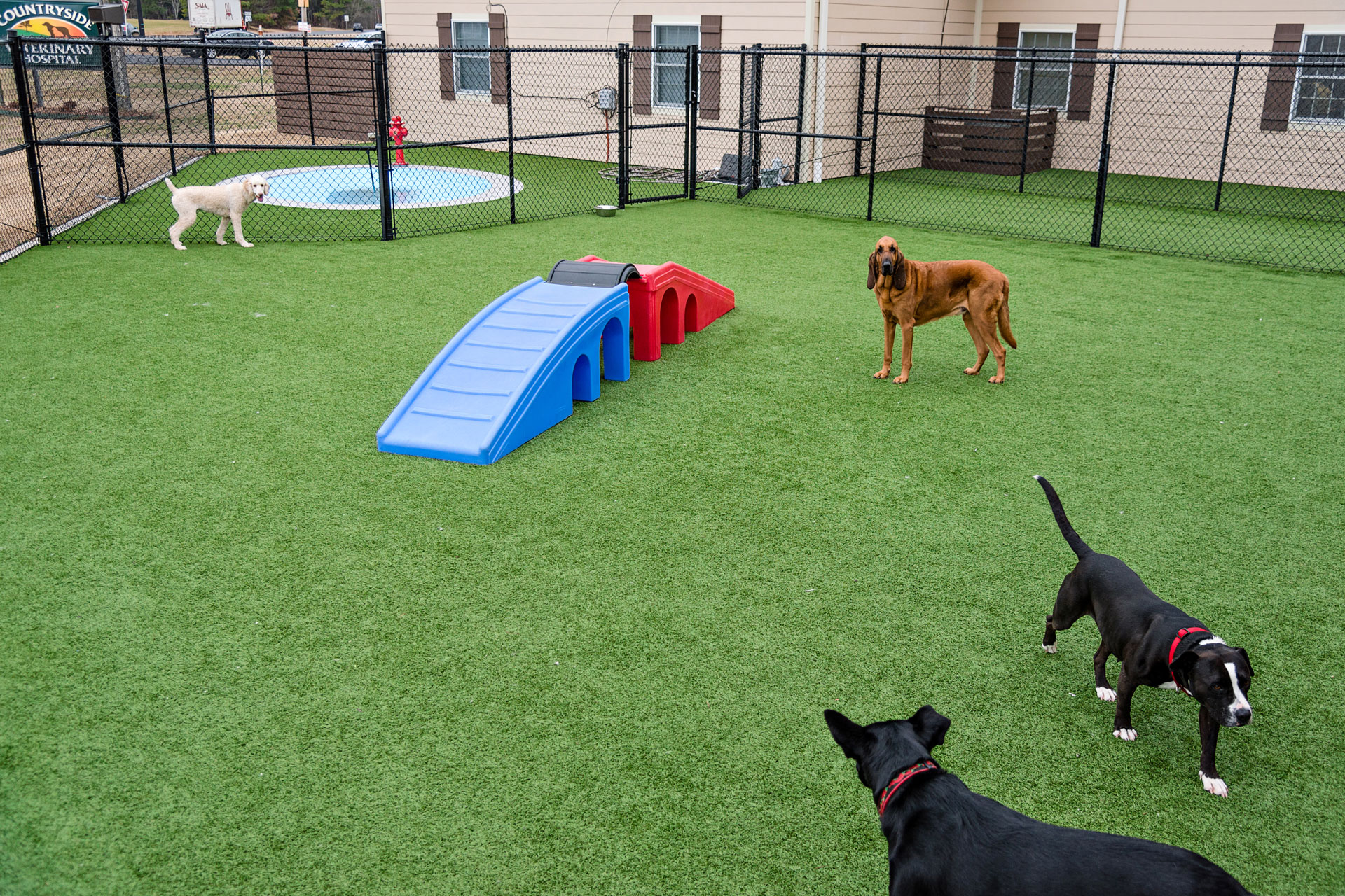 Countryside VetDogs play area
