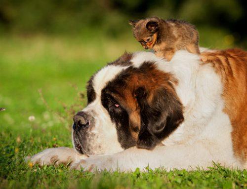 Don't Let Pet Arthritis Slow You Down