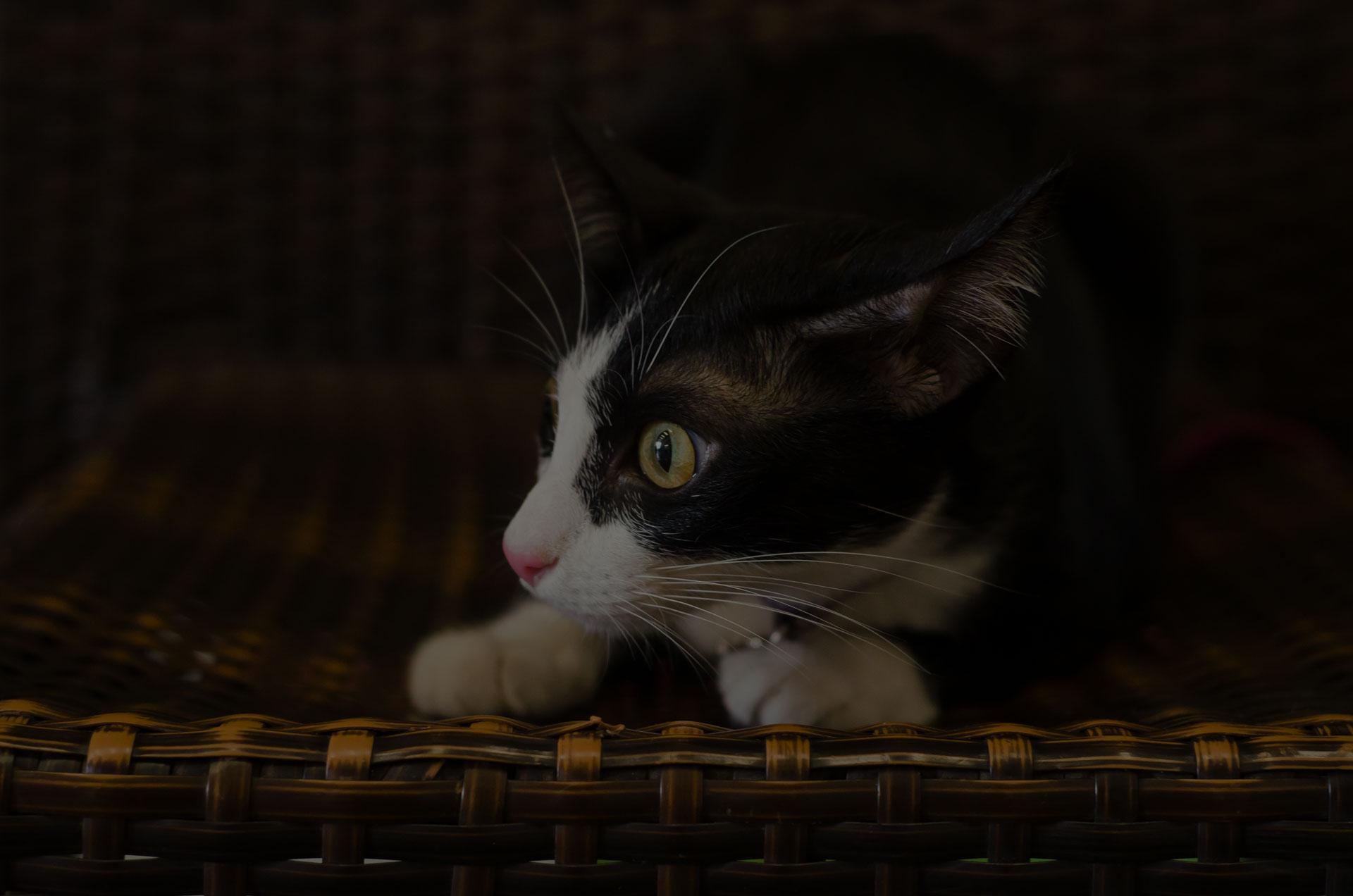 Feared cat