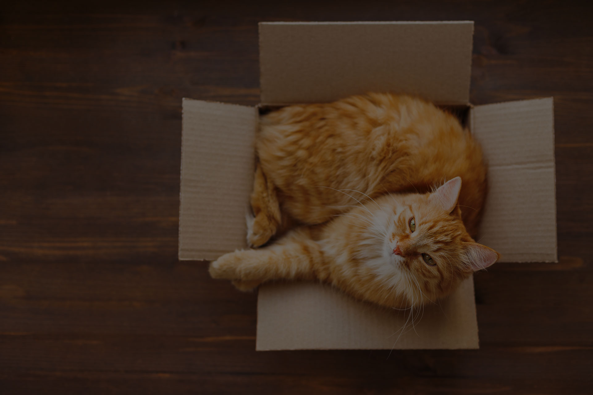 Ginger cat lies in box on wooden background