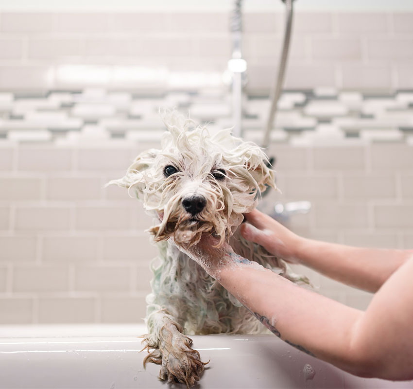 Lady showering the dog