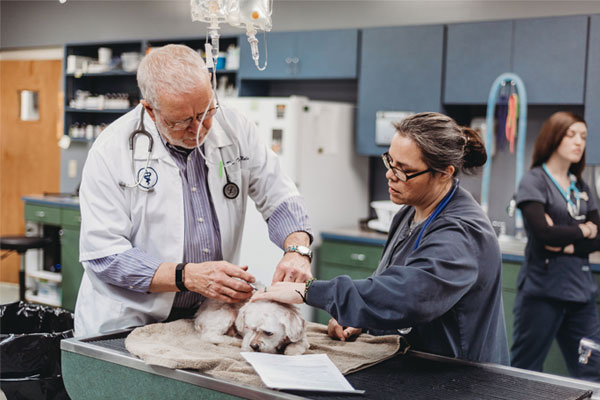Veterinarian examining the dog