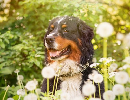 4 Signs Your Pet Could Be Suffering from Allergies