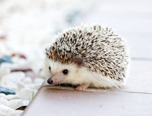 Feathers, Scales, or Gills: Is an Exotic Pet Right for Your Family?