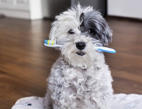 Brush Up on Dental Care for Your Pet
