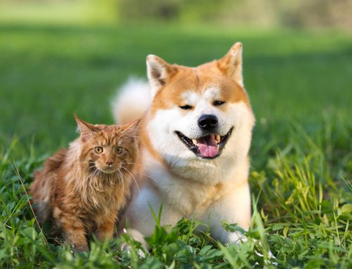 6 Misconceptions About Pet Dental Health