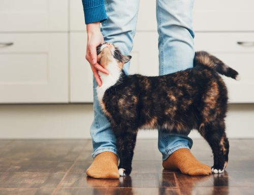 8 Facts About Fleas and Ticks