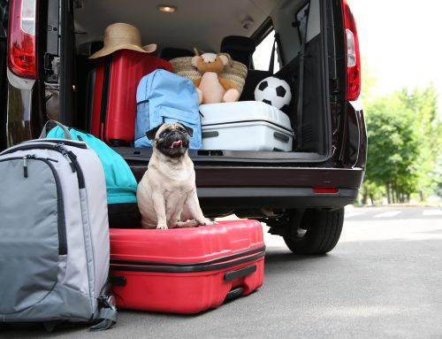 On the Road Again – With Your Pet