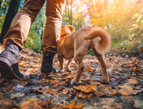 Resolve to be Active with Your Pet in 2020: 7 Ways to Get Moving