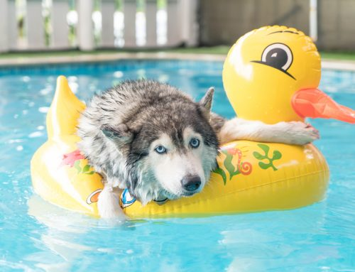 Summer Safety: How to Keep Your Pet Out of Hot Water