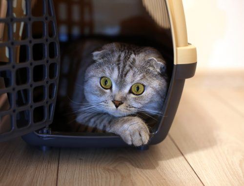 8 Tips to Prepare Your Pet for a Stress-free Veterinary Visit