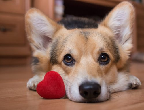 Heart Disease in Pets: What You Need to Know