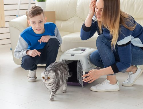 7 Tips to Smoothly Introduce a New Pet to Your Household