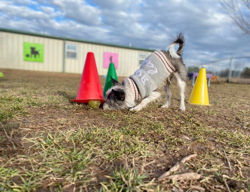 5 Types of Enrichment For Your Pet