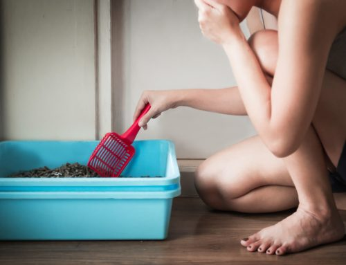 Oh, Poop: Fecal Parasites and Your Pet
