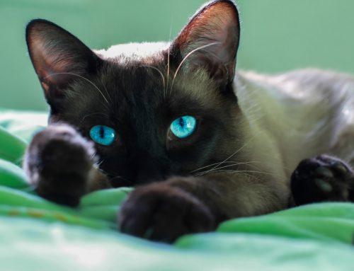 Going Viral—The Top 3 Feline Viral Diseases