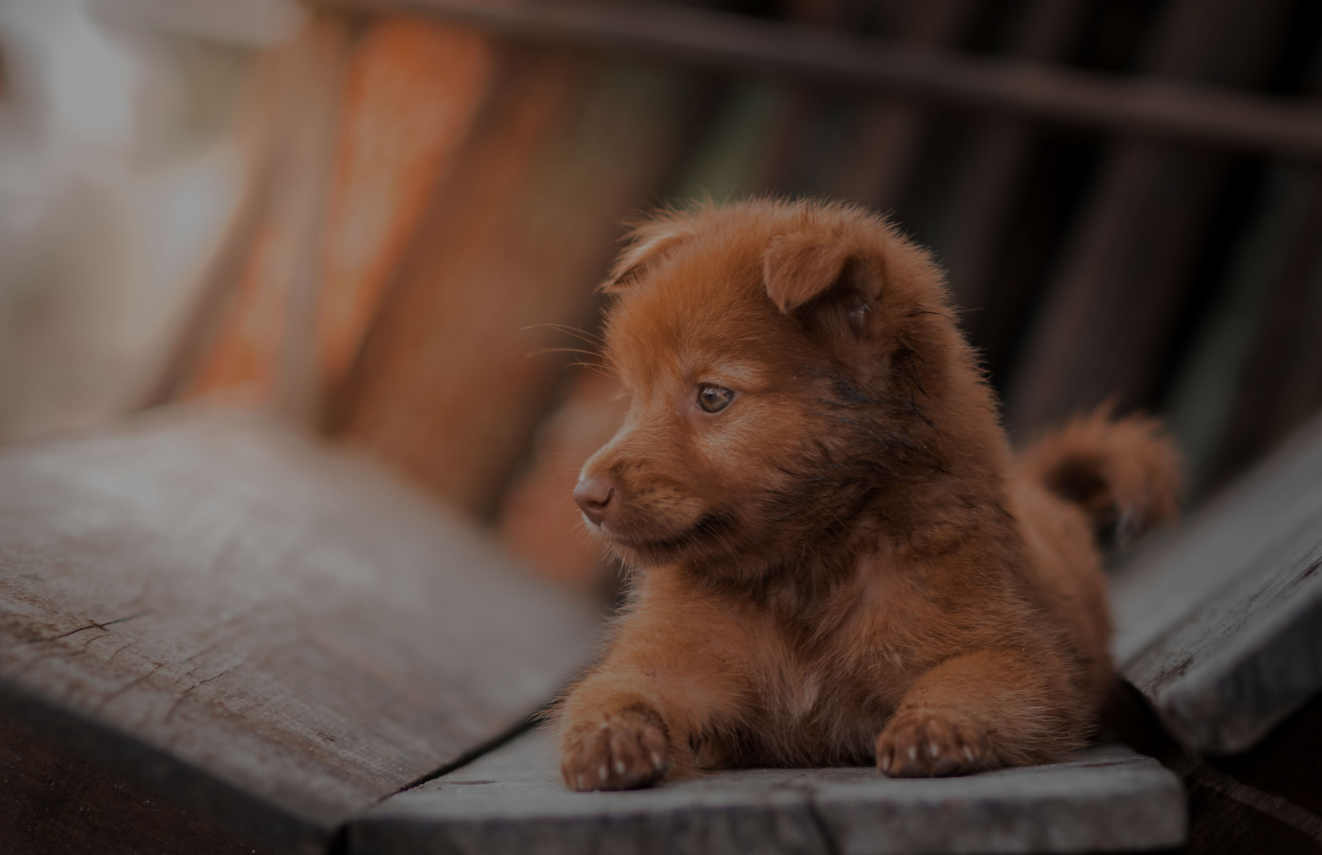 lovely brown puppy dog portrait